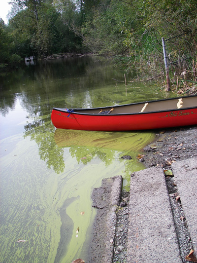 Image for toxic algae bloom in shadow lake